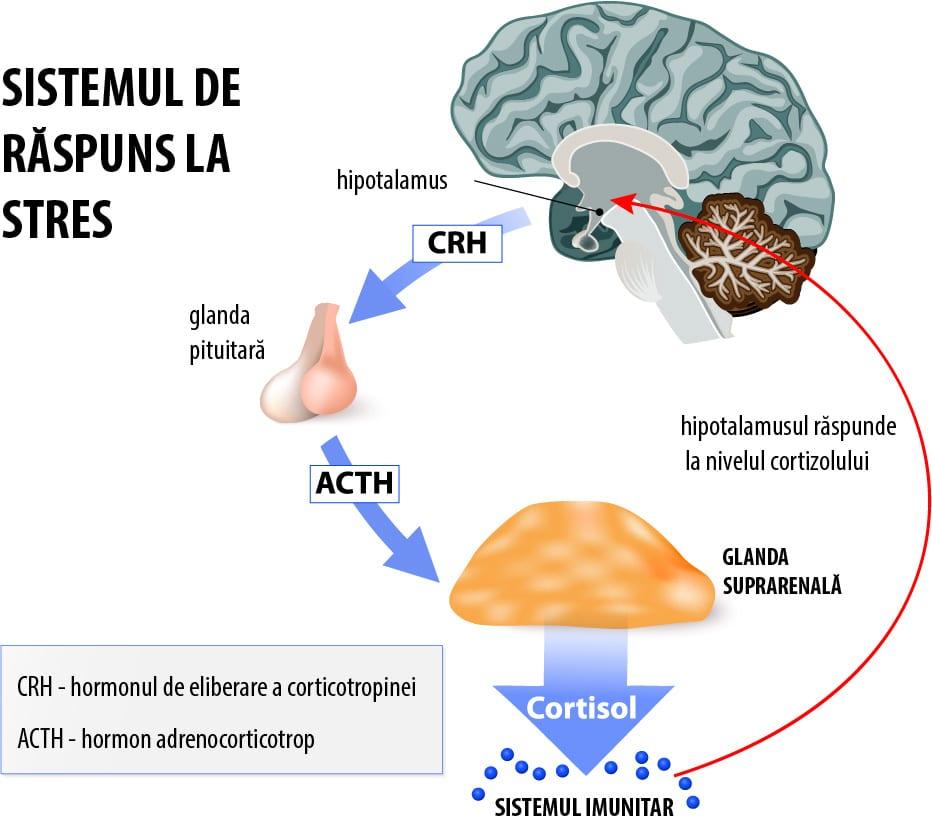 hormoni tiroidieni pentru slabit