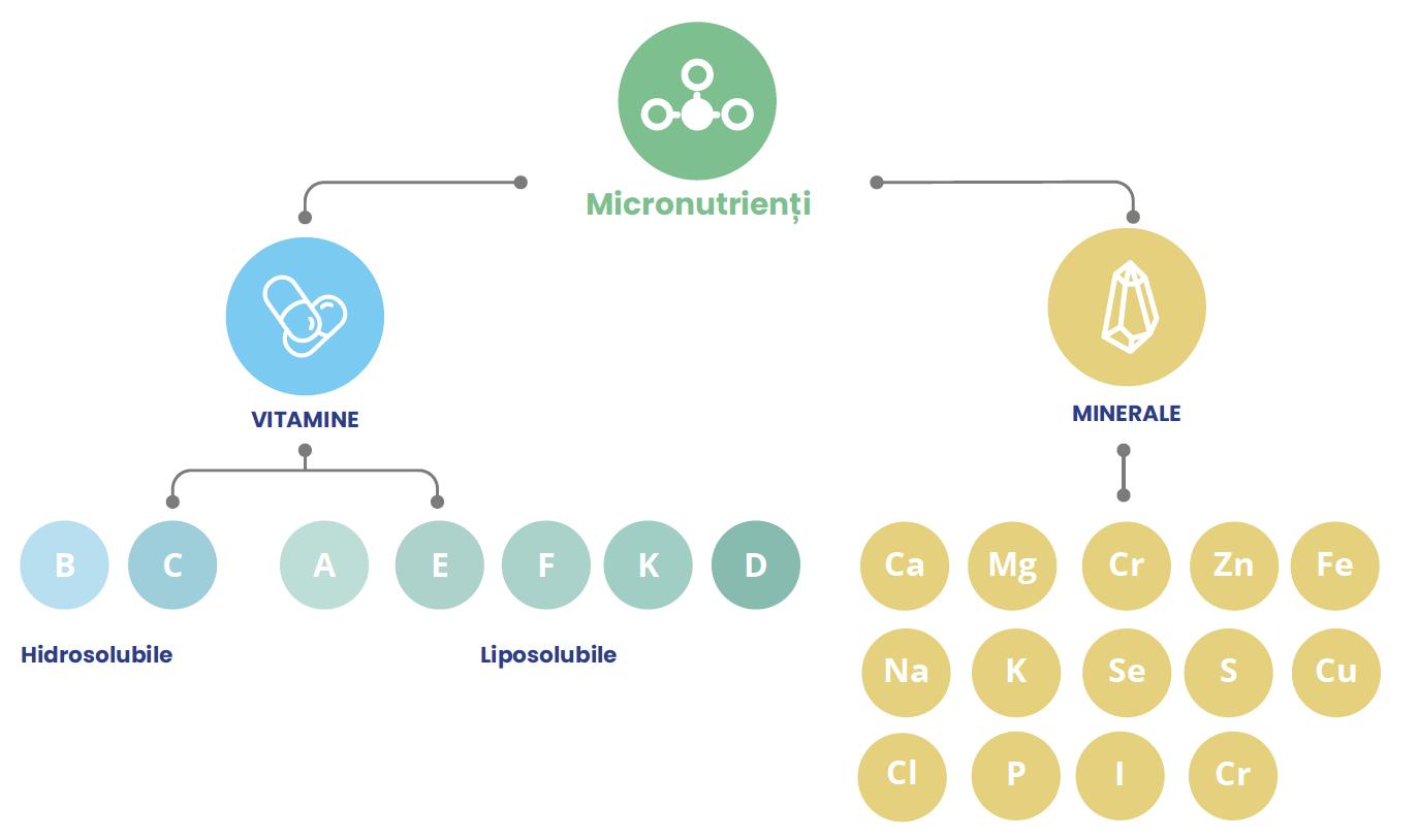 Micronutrienți, vitamine și minerale
